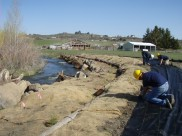 Restoration work on Cowiche Creek