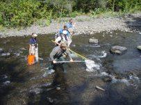 Post project fish utilization monitoring