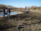Restoration planting