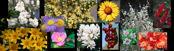 plant-guide-composite-banner